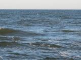 Obserwacja foki