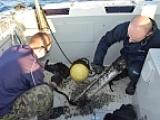 Trwa monitoring ssaków morskich – serwis detektorów.