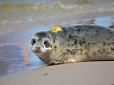 Releasing seals