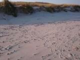 Obserwacja śladów młodej foki