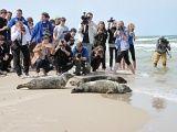 Akcja wypuszczanie fok do Bałtyku
