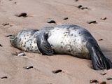 Seal observation